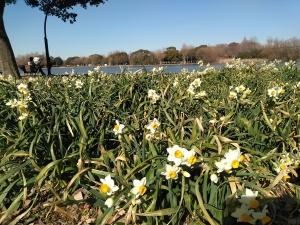 春ですね(^o^)