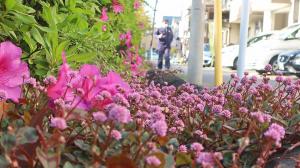 ピンクの春
