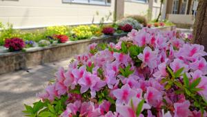 毎日通る明るい花壇