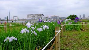 1番花は5月4日に咲きました。