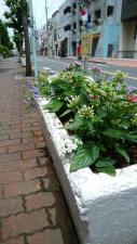 通りに沿った花壇