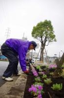 新柴又駅前の新しい花壇