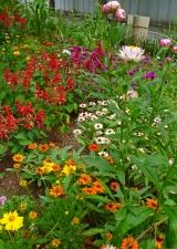 夏の花壇1