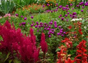夏の花壇2