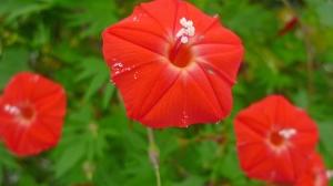 こぼれる花粉。